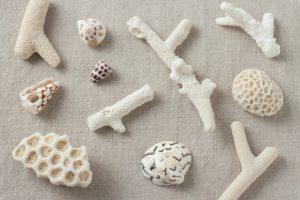 白蝶貝のアクセサリー
